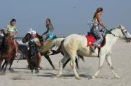 Катание на лошадях в Поповке
